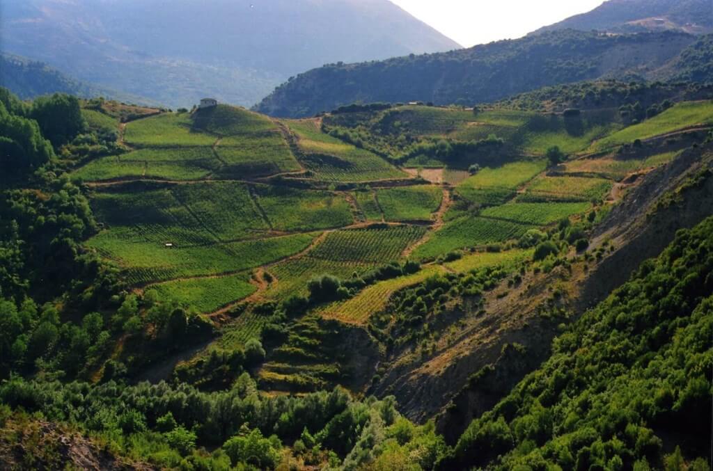 vineyard οινοποιειο αβερωφ μετσοβο