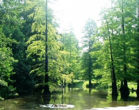 Wesfalenpark Dortmund: Waldansicht