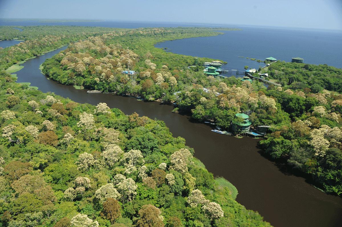 Dschungel des Ariau Amazon Towers Hotel