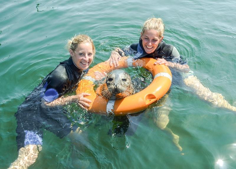 Robben in Rostock mit zwei Taucherinnen