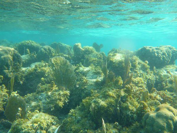 Belize Barrier Reef Unterwasserwelt Strand