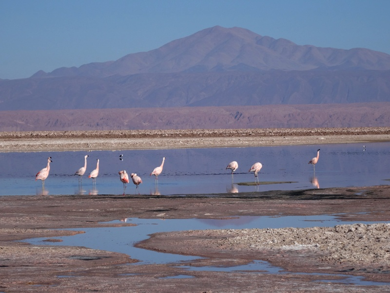 Chile Los Flamingos