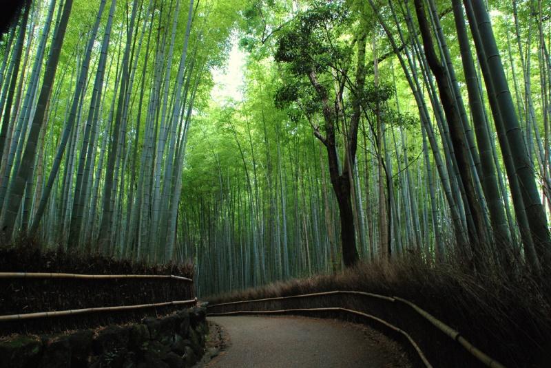 Bambuswald Sagano-Arashiyama