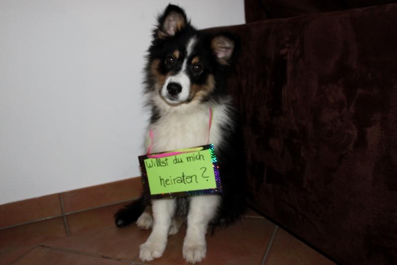 Willst du mic heiraten Hund