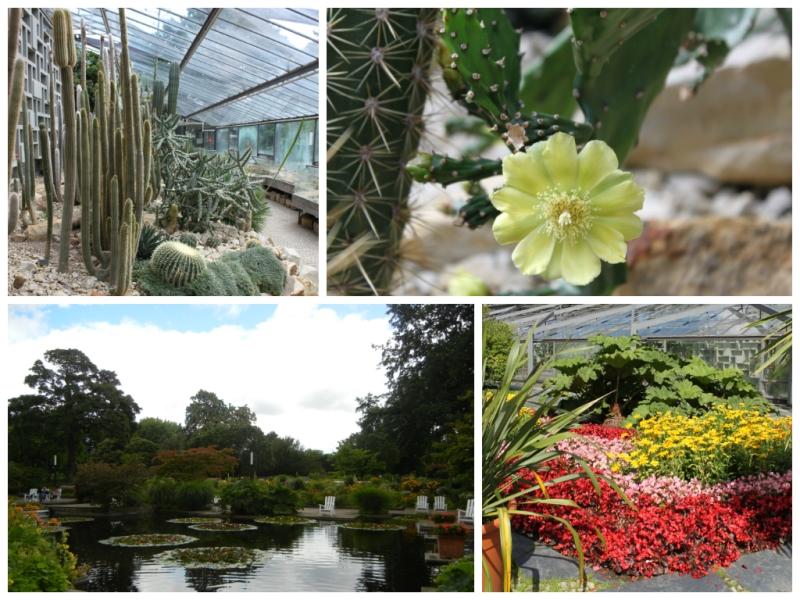 Planten un Bloomen Hamburg Botanischer Garten Tropenhaus