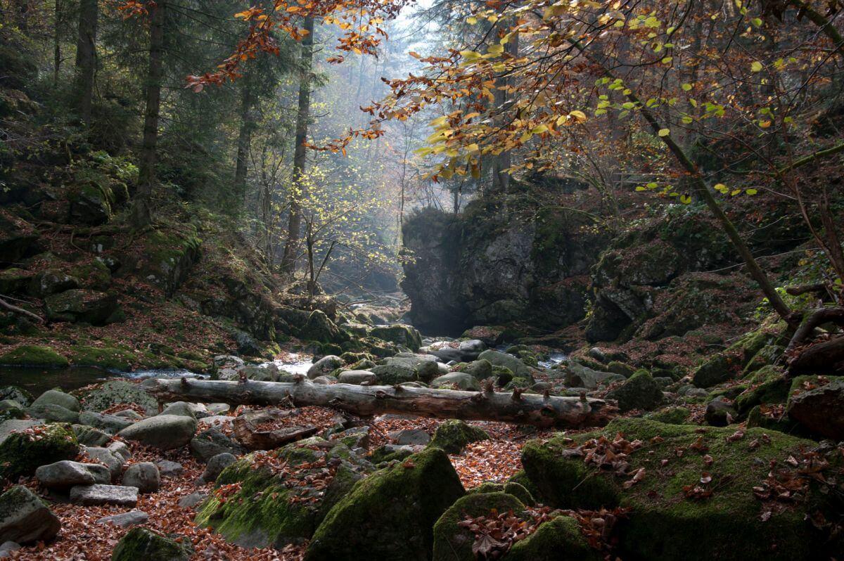 Natur Nationalpark Bayerischer Wald Bayern