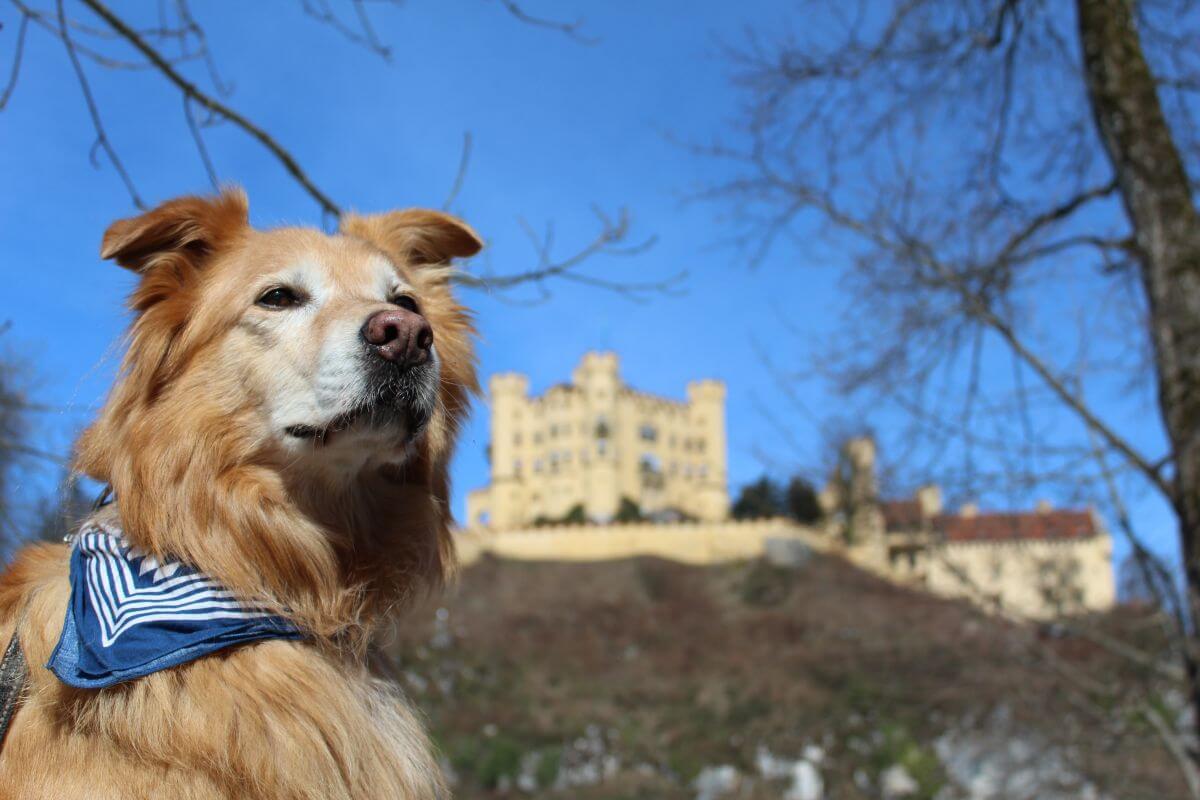 Hund Mailo von wufflog