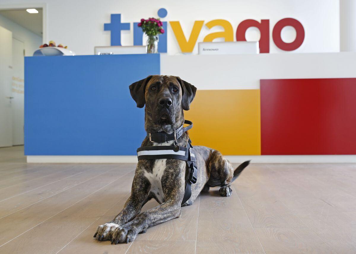 Hund Rico von gassireport