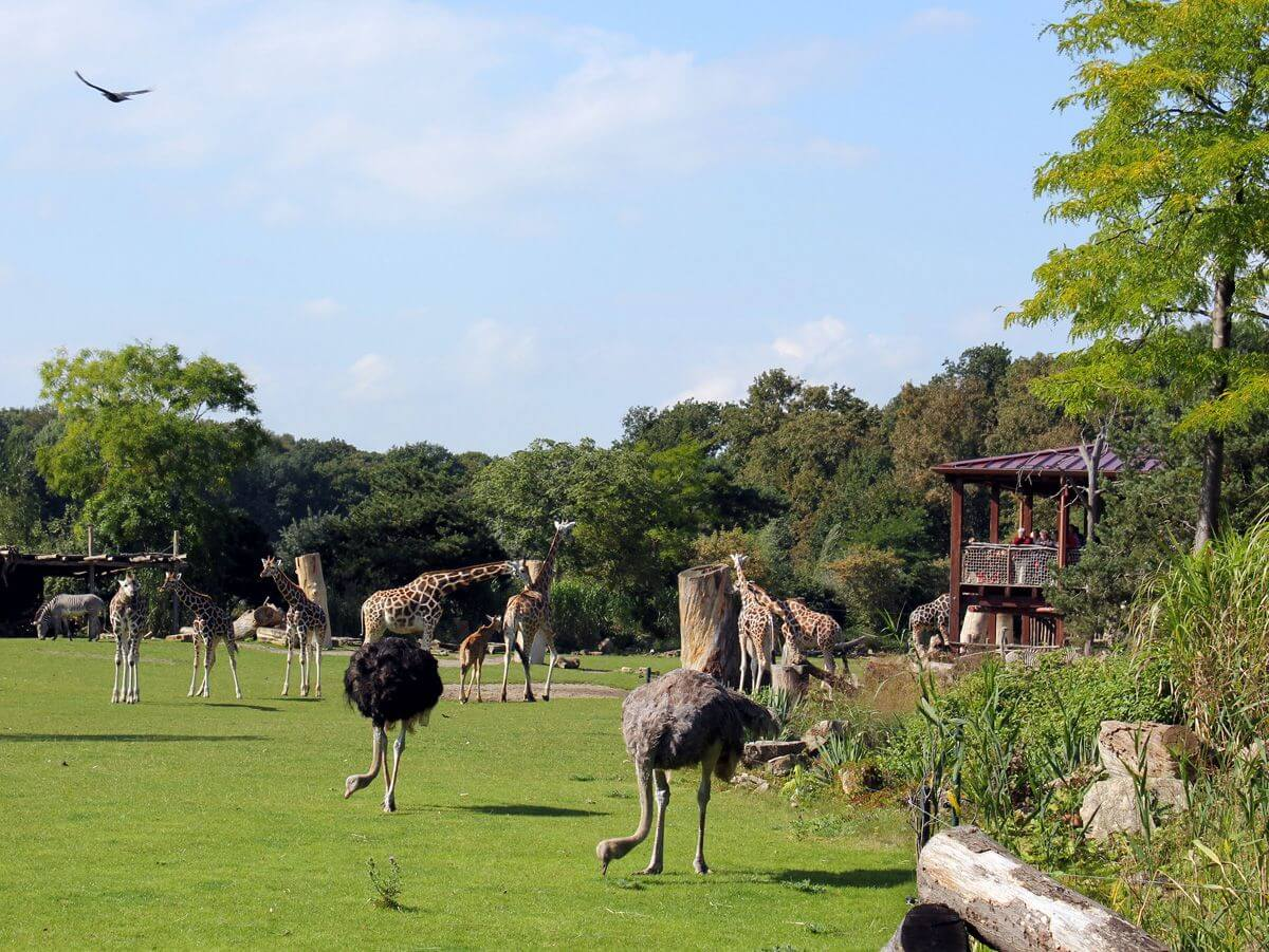 Safari für Familien Kiwiara Lodge